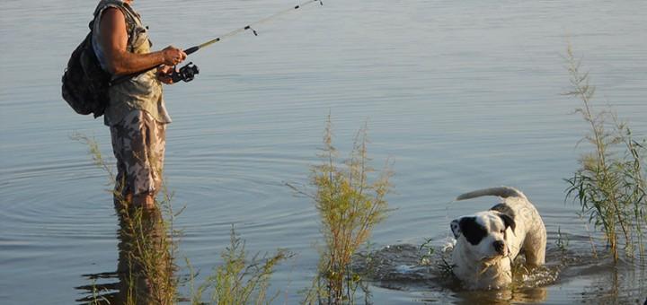A horgászat igazi élménye, amikor házi kedvencünk és hű társunk is elkísér bennünket szeretett törzshelyeinkre.